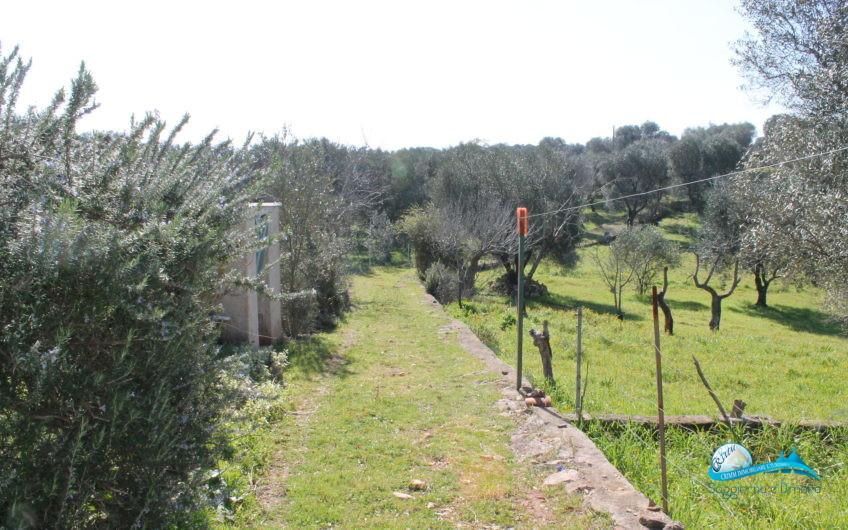 Lamie e terreno in posizione panoramica
