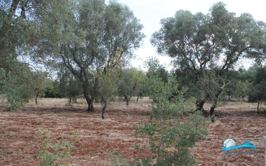 Casolare e terreno circostante
