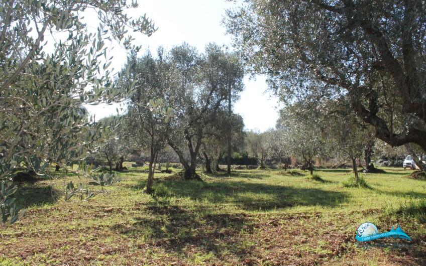 Complesso di trulli e lamie nel cuore della Valle d'Itria